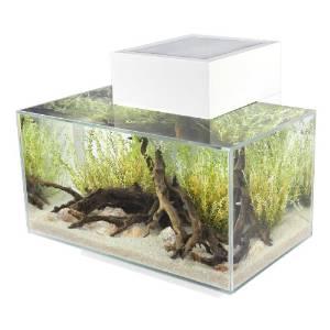 Aquarium | Gallon | White | Day | LED