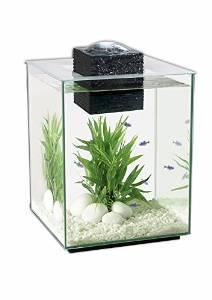 Aquarium | Gallon | Day